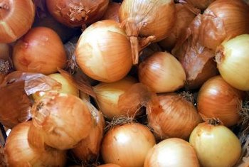 Onions are ready for harvest when their foliage yellows.