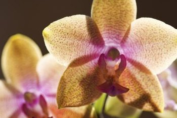 Orchids grow well in closed terrariums.