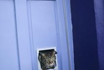 How to install a cat door in a hollow core door home - Interior door with pet door installed ...