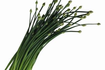 Place chives in a sunny window for indoor growing.