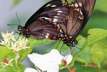Flowering annuals can attract butterflies to your garden.