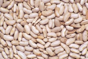Dried white beans are among the simplest of vegetables to harvest.