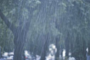 Plants that use a lot of water will make the best of heavy rainstorms.