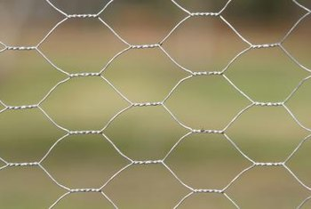 A chicken wire fence for climbing vines is easy to build.
