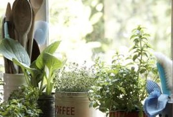 Tin cans make sturdy, reusable containers for indoor herb gardens.