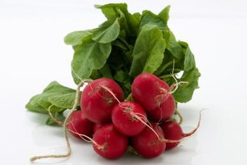 Spring radish varieties are smaller and red in hue, while winter varieties are larger and irregular in shape.