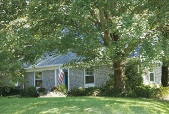 A shade tree might keep your house cooler in the summer.