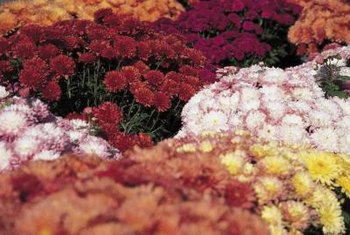Colorful mums and straw bales add a natural vibe to fall displays.