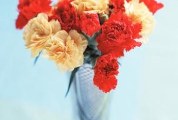 Carnations have been known and loved since ancient times.
