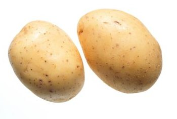 The potato was first domesticated by the ancient Andean civilization.