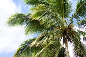 Discolorations on palm fronds can indicate a mineral deficiency.