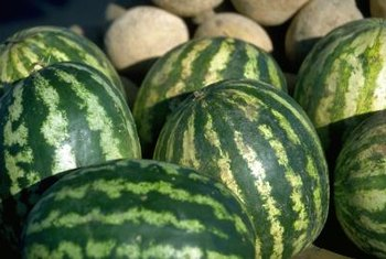 Growing sweet-tasting melons is possible even in challenging climates.