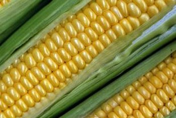 Sweet corn has a high sugar content that gives it flavor.