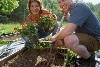 Add finished compost to garden beds to help conserve moisture, keep the soil temperature warm and deter weeds.