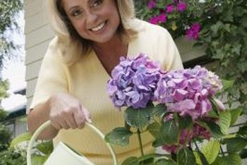 Move potted hydrangea that bloom on old wood indoors when temperatures dip below freezing.