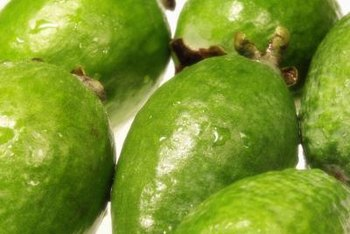 Enjoy fresh guava every summer once your tree matures.
