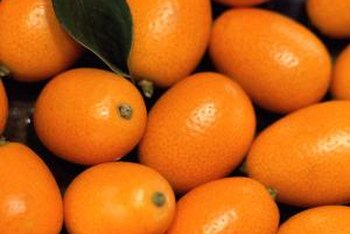 Kumquats are small oval fruits, approximately the size of a small plum.
