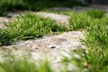 Grass growing up through the hardscape is an ongoing problem for many homeowners.
