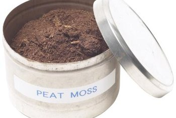 Peat moss is a component of many potting soils that makes the soil more acidic.
