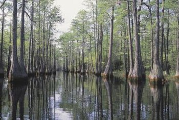 Swamps are essentially water-logged forests.