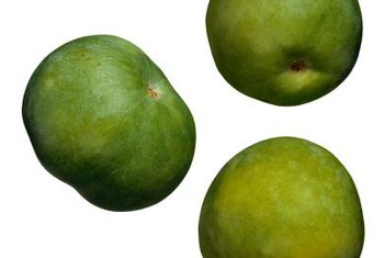 Sapote trees are prolific bearers of small, green fruit.