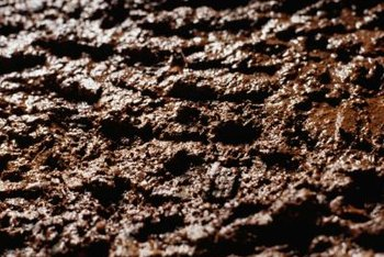 Wet soil is more prone to fungus growth than dry soil.