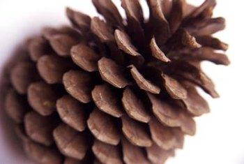 Cluster natural pinecones in a swag for your front door.