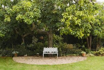 Companion plants must be able to thrive in the amount of sunlight they will receive beneath the tree canopy.