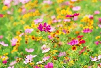 Bright flowers stand out from the monotony of green grass.