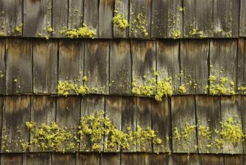 The damp moss enables fungi to eat away at the wood shingles.