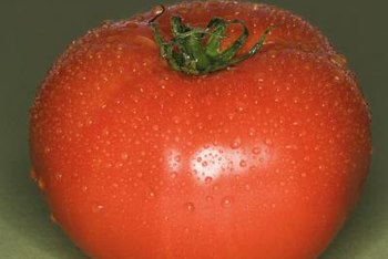 Tomato plants require both light and darkness to produce healthy fruit.
