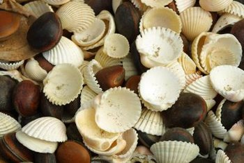 Seashells serve as beach-themed decor in bowls, in glass vessels or to a picture frame.