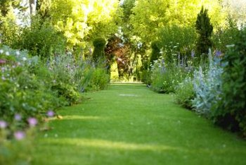 A strong edge characterizes the English garden.