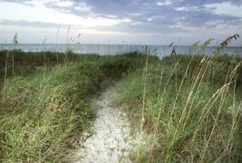 Vegetation begins to increase as you move further away from the beach, due to lower salt contents.