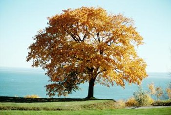 The leaves on deciduous tree change color and drop from the tree in the fall.