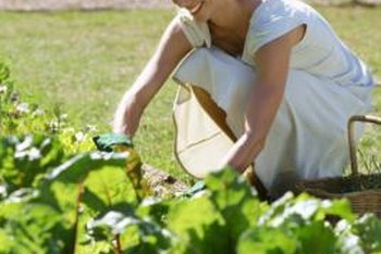 Use care when applying herbicides and pesticides to the garden.