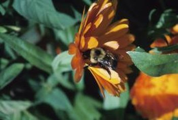 Pesticides can kill off bees, which means you'll need to pollinate by hand.