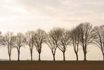 Group trees for practical and appealing impact in a landscape.