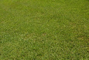 Fixing sod problems provides you with a full lawn.