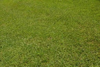 Fertilizer adds the required nutrients for a healthy lawn.