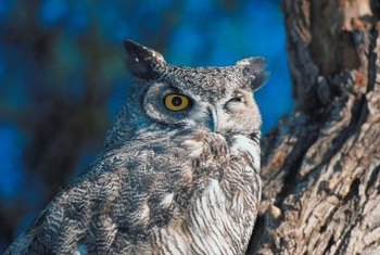 Owls are a natural predator of voles and other rodents.
