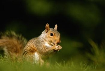 Squirrels are cute until they begin to feast on your flower bulbs.