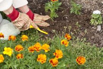 You can plant both annual and perennial flowers outdoors.