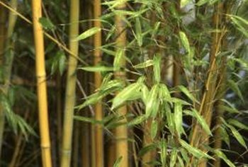 Choose bamboo varieties that aren't invasive in your area.