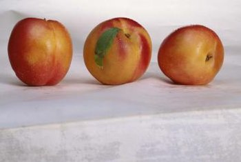 Nectarines are self-pollinating fruit that can be grown indoors.