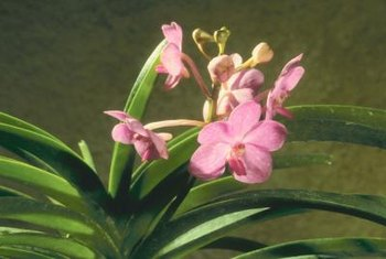 Many orchids can grow indoors or out.