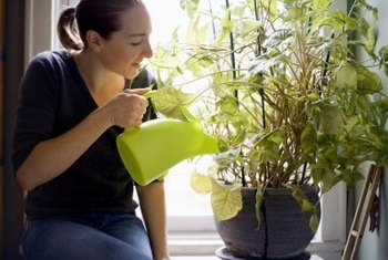 Water-retaining polymers may help reduce the need to water your plants.