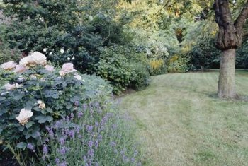 Maintain space between your grass and shrubs for healthy growth.