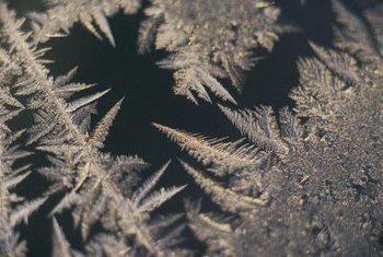 Cold temperatures damage plant tissue in tender plants.