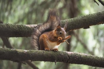 Keep bird feeders at least 10 feet away from trees to prevent squirrels from jumping onto them.